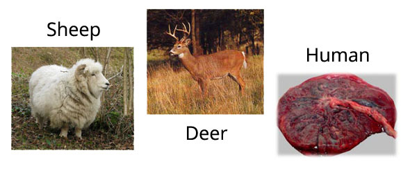 Purtier Deer Placenta Sources Of Stem Cells
